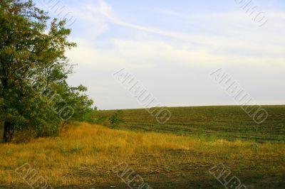 Seasonal landscape