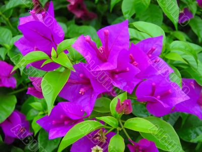 fresh flower plant purple