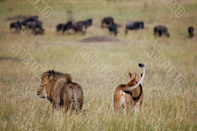 Royal family at hunt.