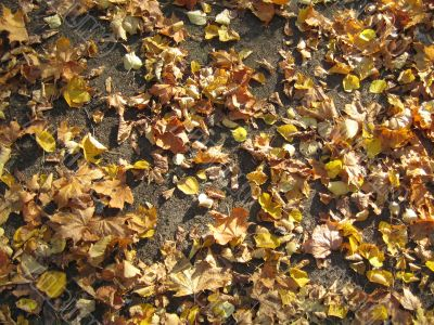 Leaves on the ground