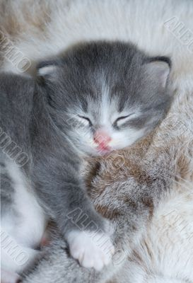 cute kitty sleeping