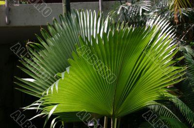 Ferns, brightly lit