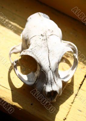 Skull of the animal 2