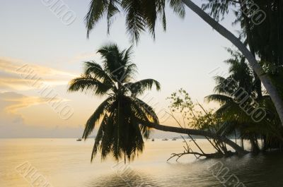 Sunrise on the tropical island