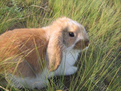 rabbit decorative