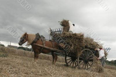Vintage manual harvest scene