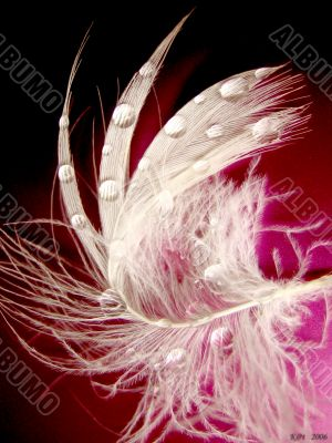 lung feather