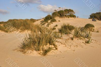Bushes on sand