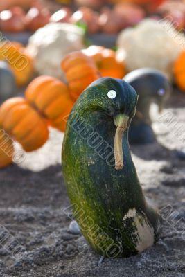 Doll vegetable marrow