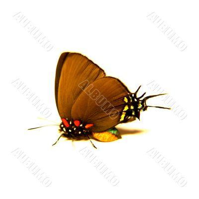 Wings of bugs