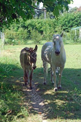 Provence - Animals