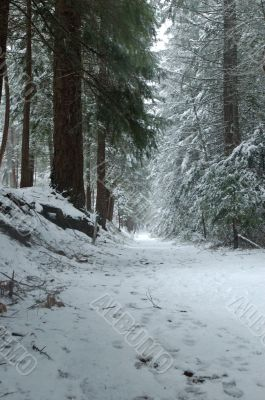 snowy trail in the woods
