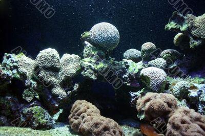 Ocean flora
