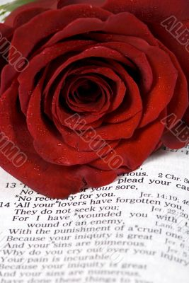 Bible and Rose