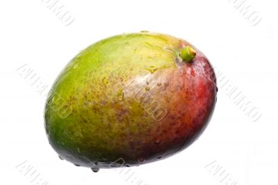 fresh multicolored mango