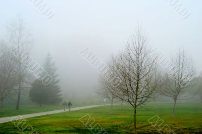 Morning Walk on a Foggy day
