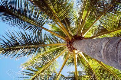 High Rising Palm Tree