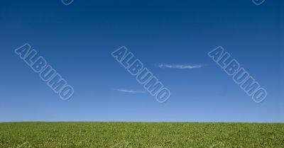 Open meadow 2