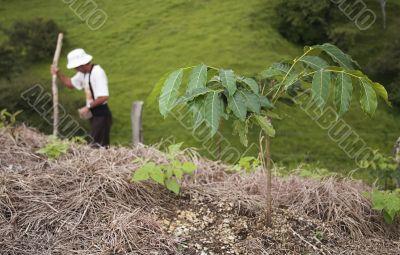 Bean Plant and farmer