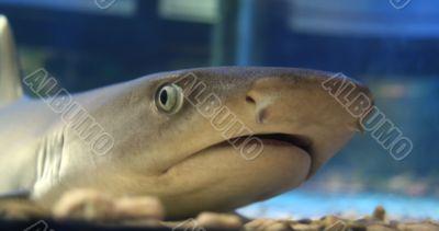 surprise of shark