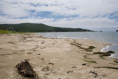 Beach with tracks and dry seaweed