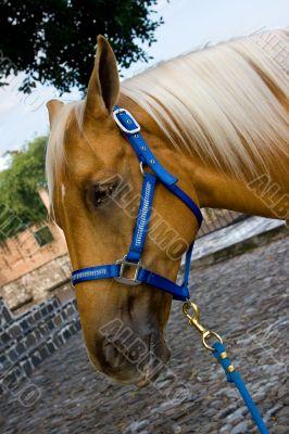 Horse close-up 2
