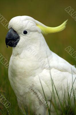 parrot detail
