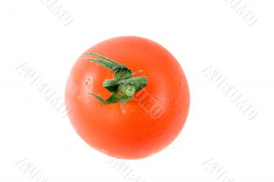 Top of tomato isolated on white