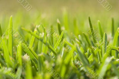 grass perspective (soft focus)