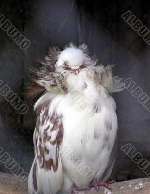 A sleeping bird in Zoo