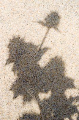 plant shadows on beach