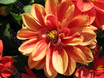curly orange flower