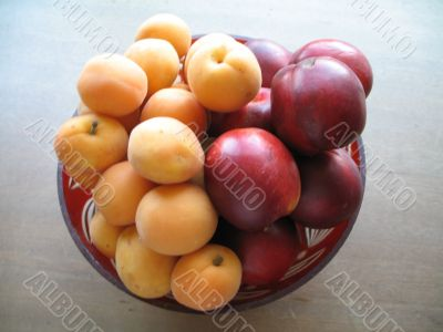appetizing nectarines and apricots