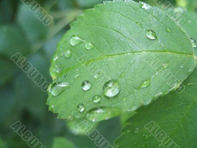 tears of the sun on the leaf