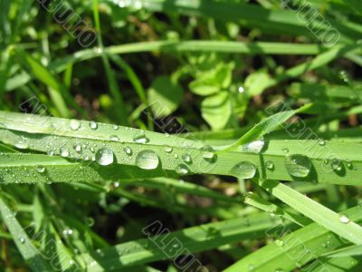 tears of dew on the grass