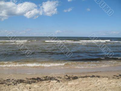 marine scene