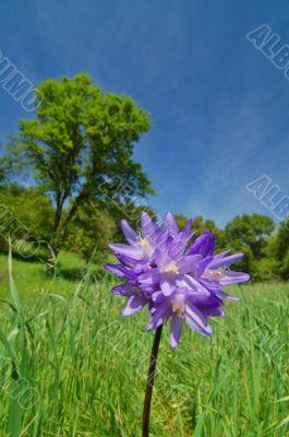 flower in springtime meadow