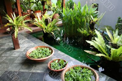 Balinese decor plants