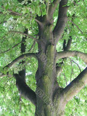 interesting species of the tree
