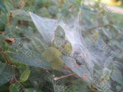 foliage in the intricate pattern of spider web