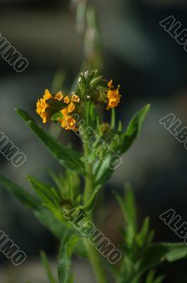 springtime flora