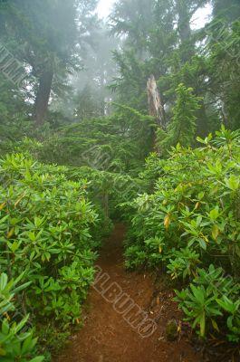 Pacific Northwest Rainforest