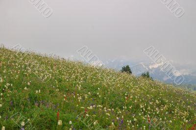 Flowery mountain meadow