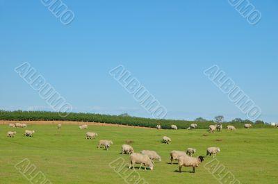 Rural Pasture