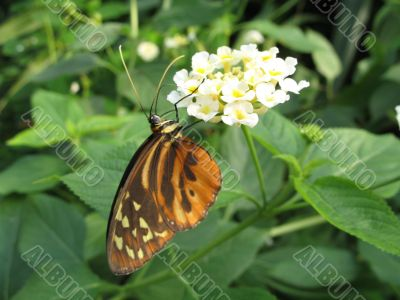 a small butterfly on a white flower