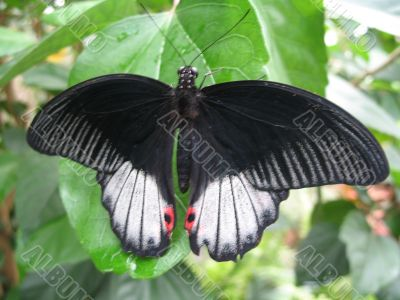 a butterfly spreading the wings