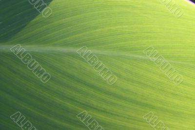 green exotic leaf