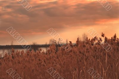 Landscape with bird and reed. Sunset