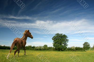 Pony in a green field