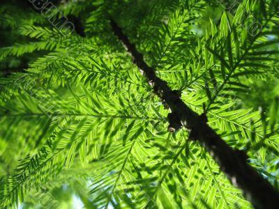 path through the jungle